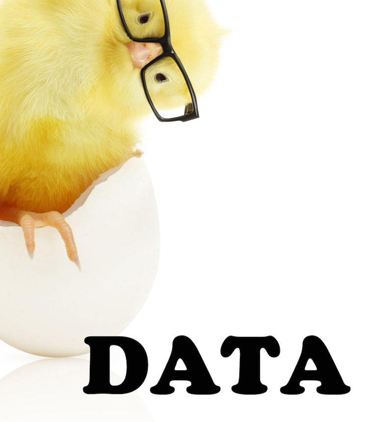 THE CHICKEN OR THE DATA?